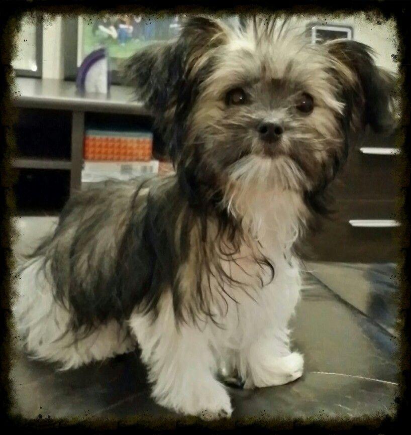 Mi Ki Puppy Love Miki Dog Puppies Dog Breeds