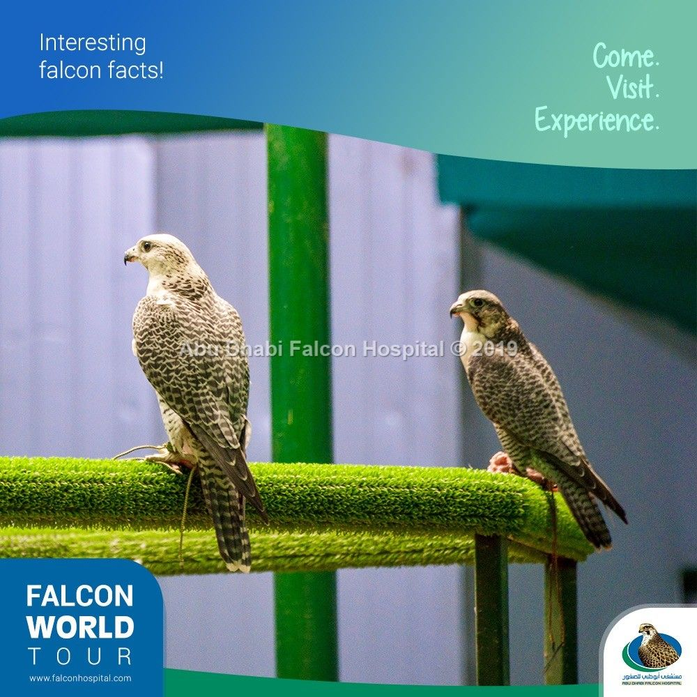 Abu Dhabi Falcon Hospital World Abu Dhabi Tours