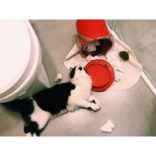 Quando você esquece a porta do banheiro aberta.   30 imagens reais demais para todo mundo que vive com um gato