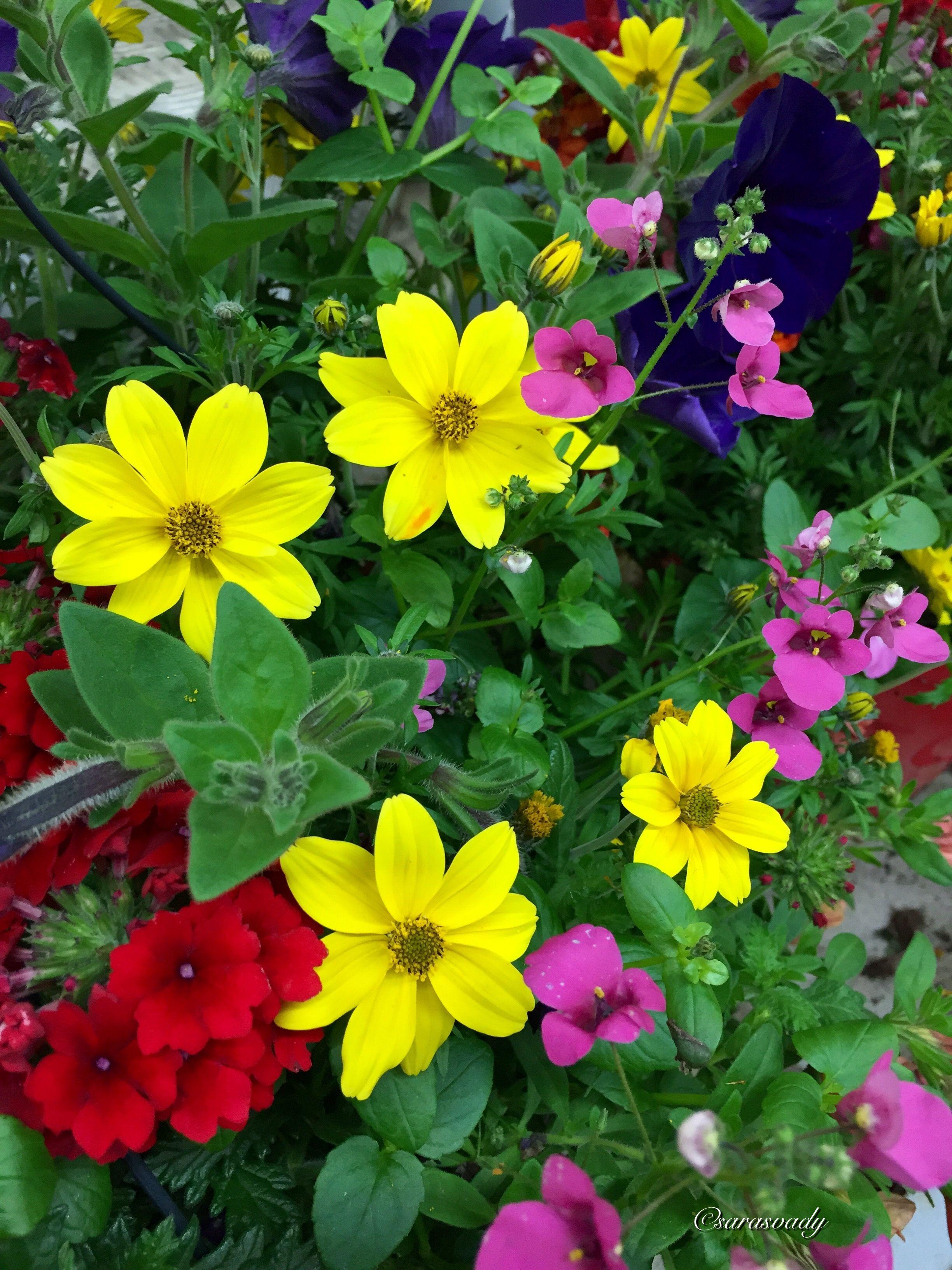 Plantas De Flores Pequenas