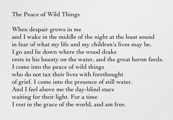 The Peace of Wild Things - Wendell Berry | Wendell berry, Meaningful  lyrics, Poetry words