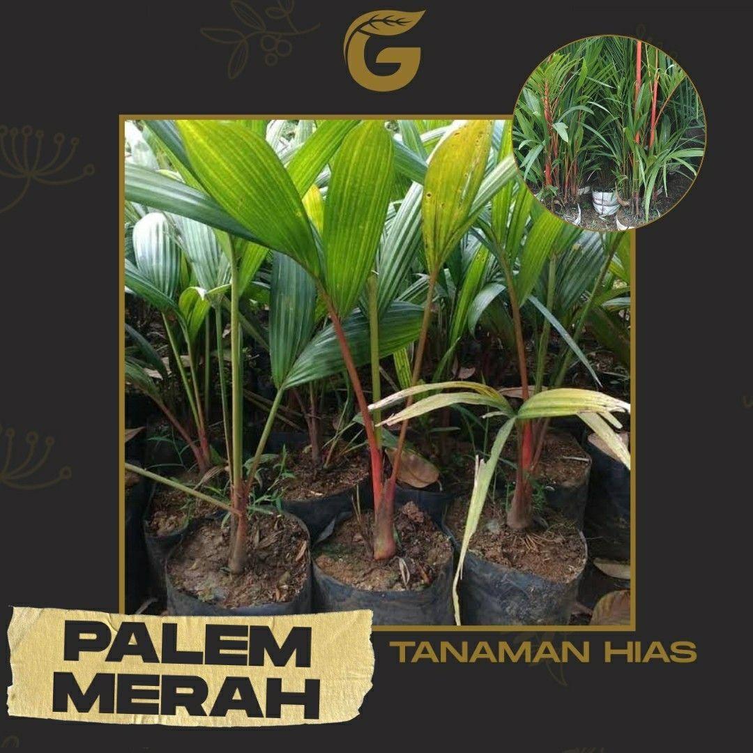 #hargatanaman#tanaman hias