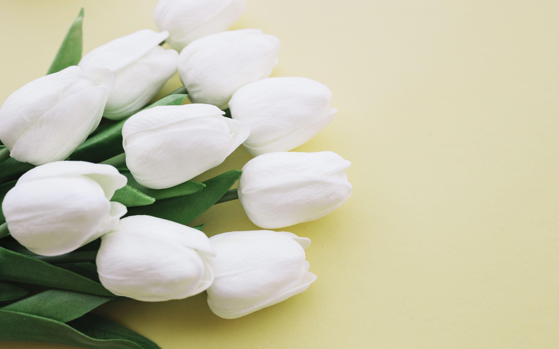 Fiori Bianchi Foto.Tulipani Bianchi Bellissimi Fiori Bianchi Tulipani Su Sfondo