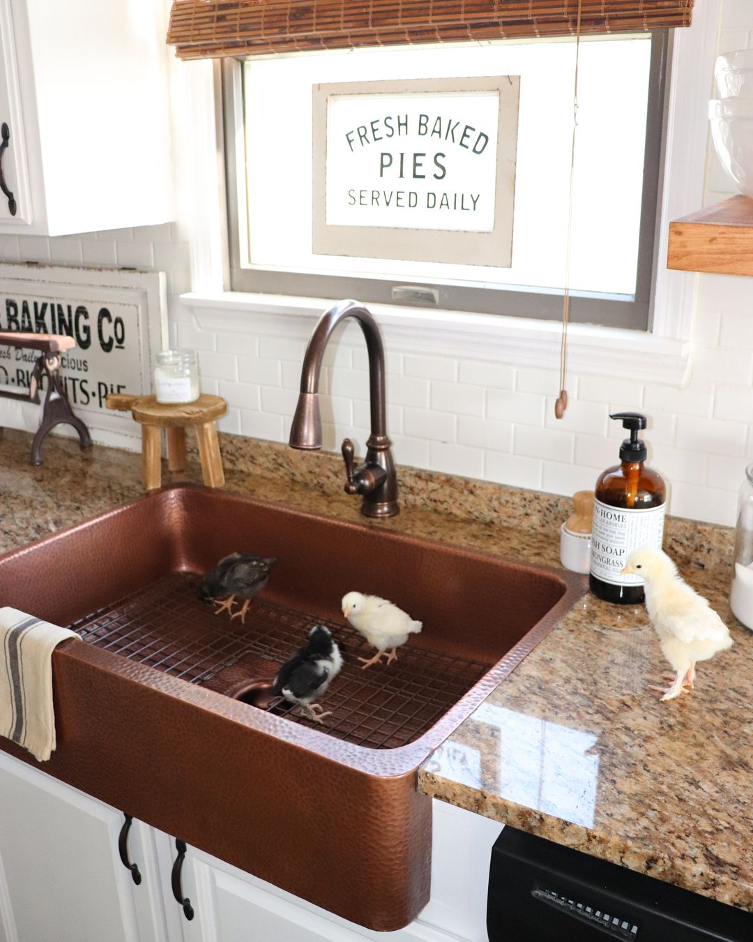 Baby Chicks in Hammered Copper Farmhouse Sink from