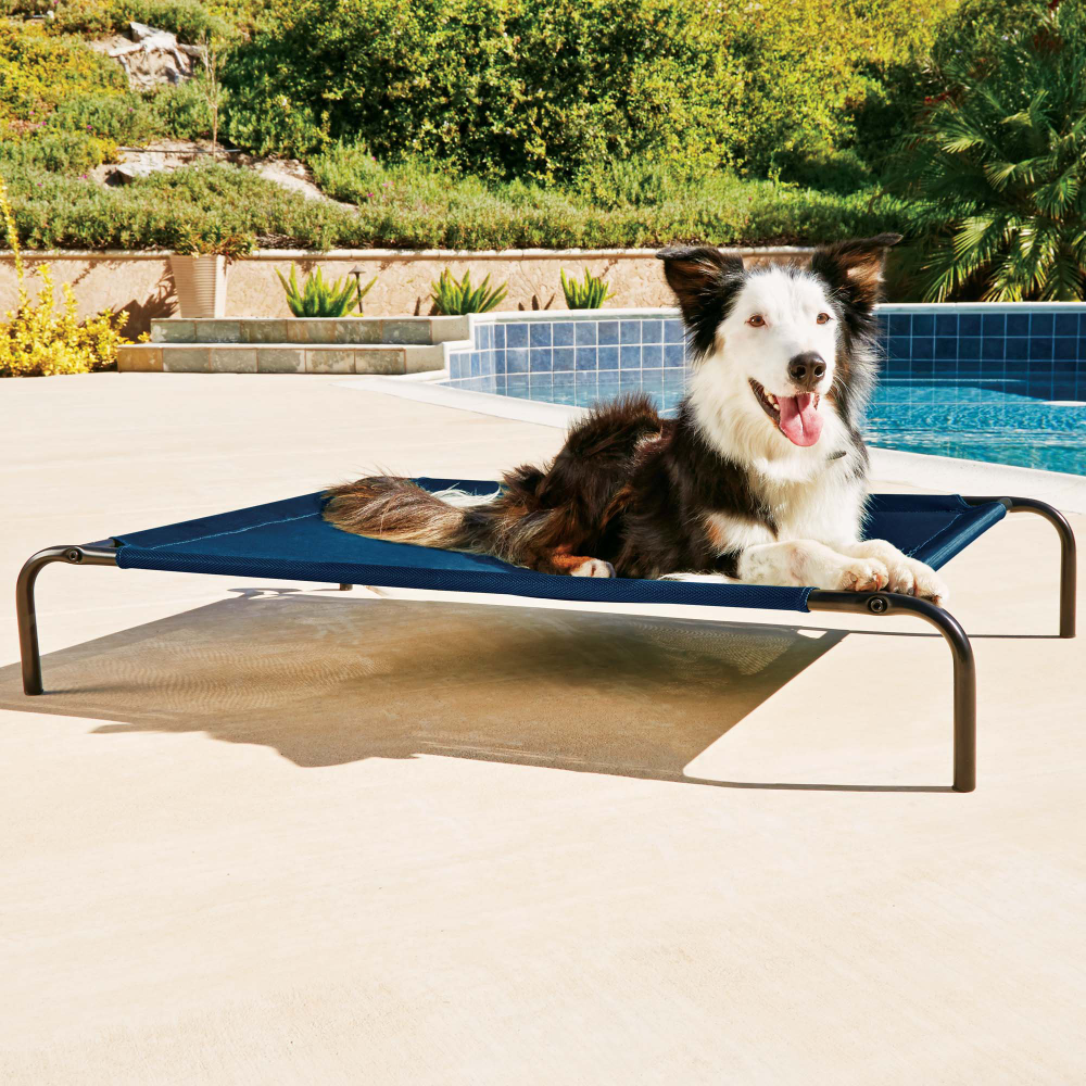 Good2go Cooling Cot For Dogs 40 X 30 Dogs Petco Dog Cots