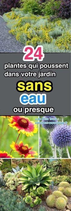 24 Plantes Qui Poussent Dans Votre Jardin SANS EAU (ou Presque). | Jardin facile, Jardinage et ...