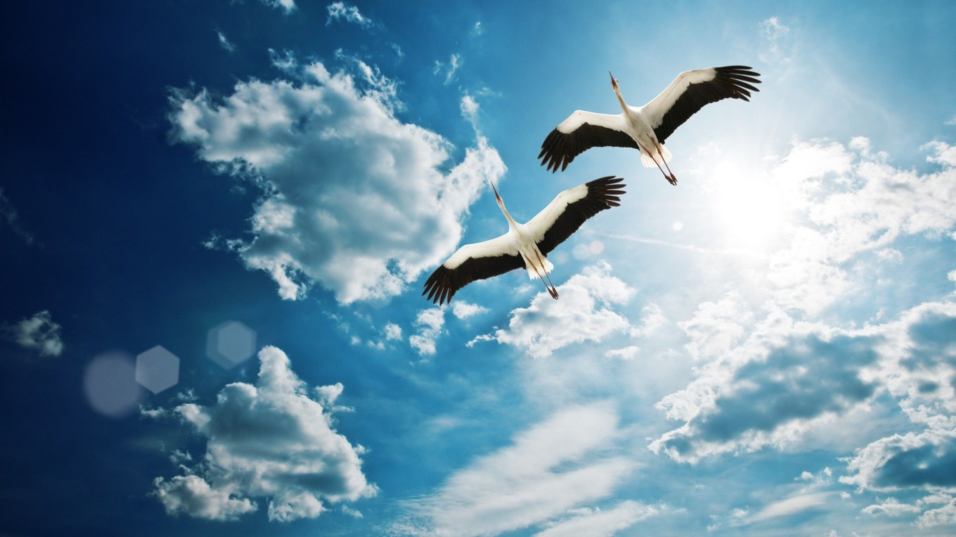 Картинки по запросу птица в небе | Летающая птица, Обои с птицами ...