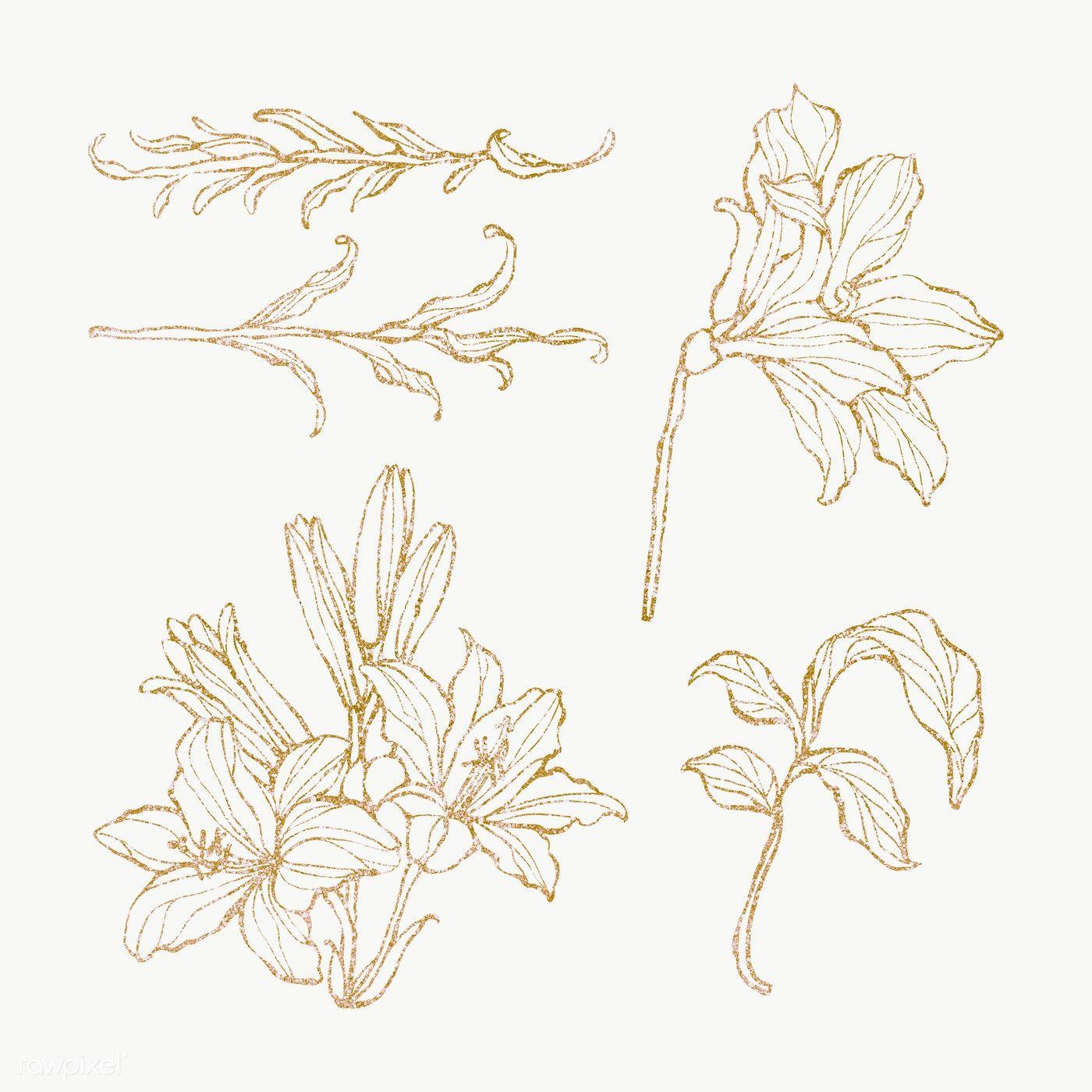 Download Premium Png Of Gold Floral Outline Set Transparent Png 2019745 Flower Outline Leaf Outline Flower Illustration