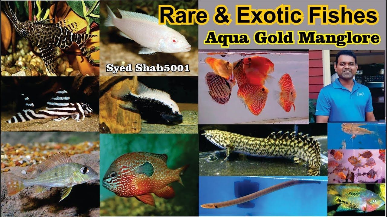 Pin On Banglaore Aquarium Store