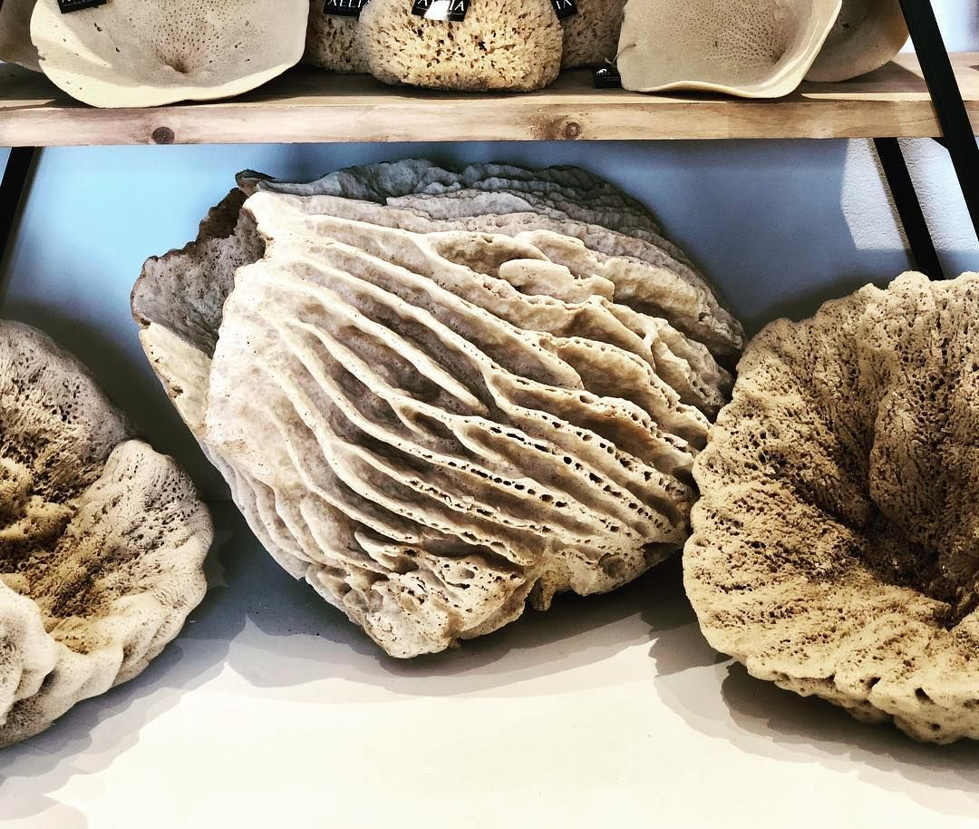 Never seen such incredible natural sea sponges ! #wow#nauticaldecor#interiorinspo#bungalow55