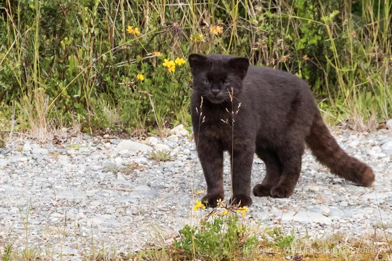 9 Tiny Wild Cats You Didn T Even Know Existed Small Wild Cats Mammals Wild Cats