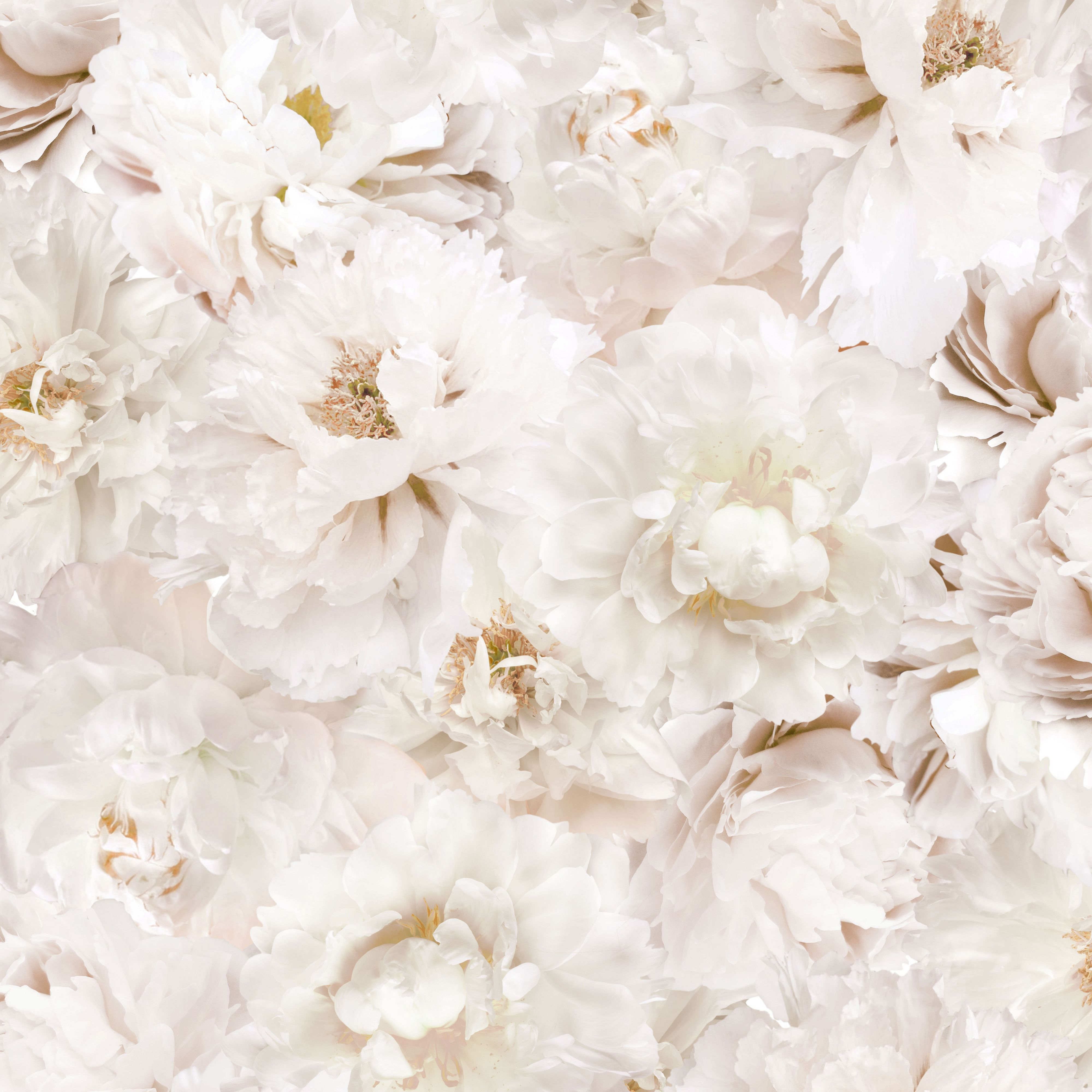 Best Graham Brown White Flowers Cream Floral Wallpaper Departments Diy At B Q Make This Into A 400 x 300
