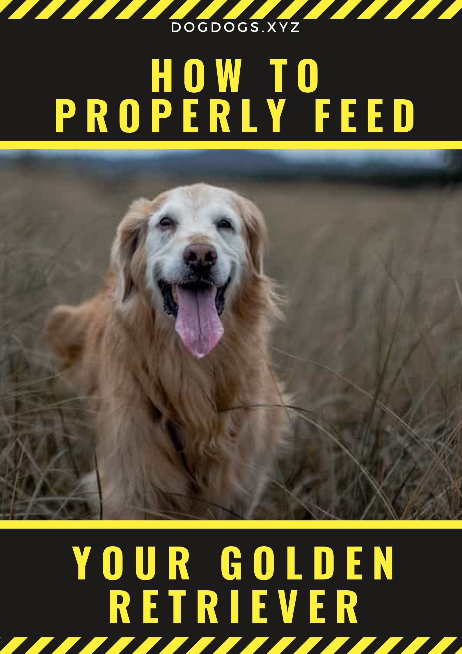 How To Properly Feed Your Golden Retriever Dog Foods Golden