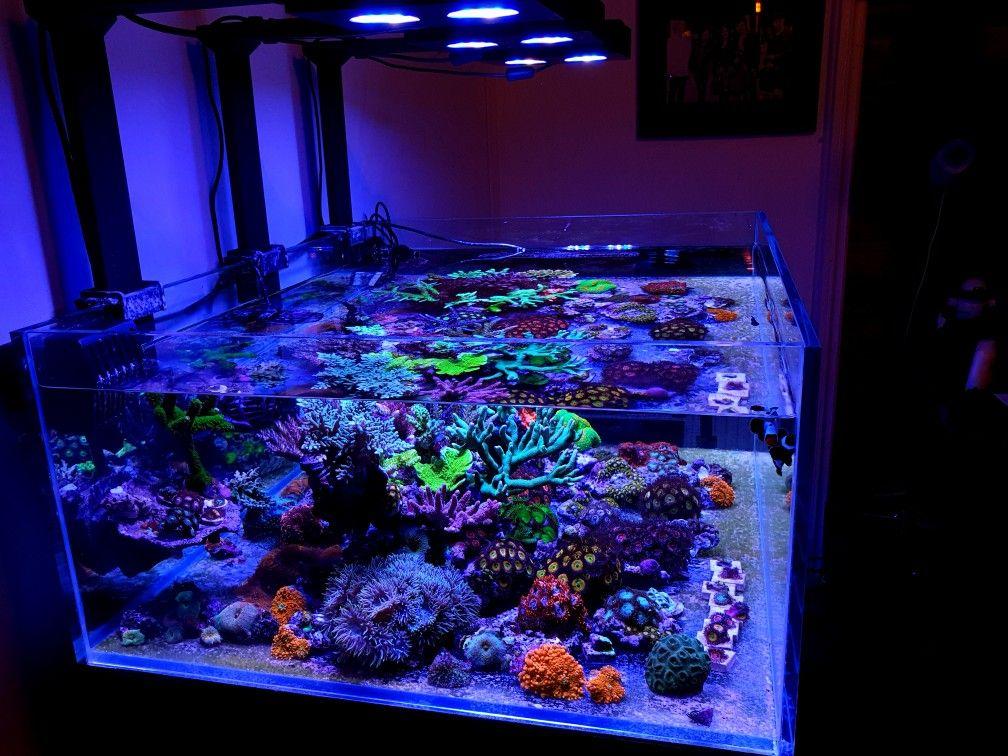 Pin Auf Korallen