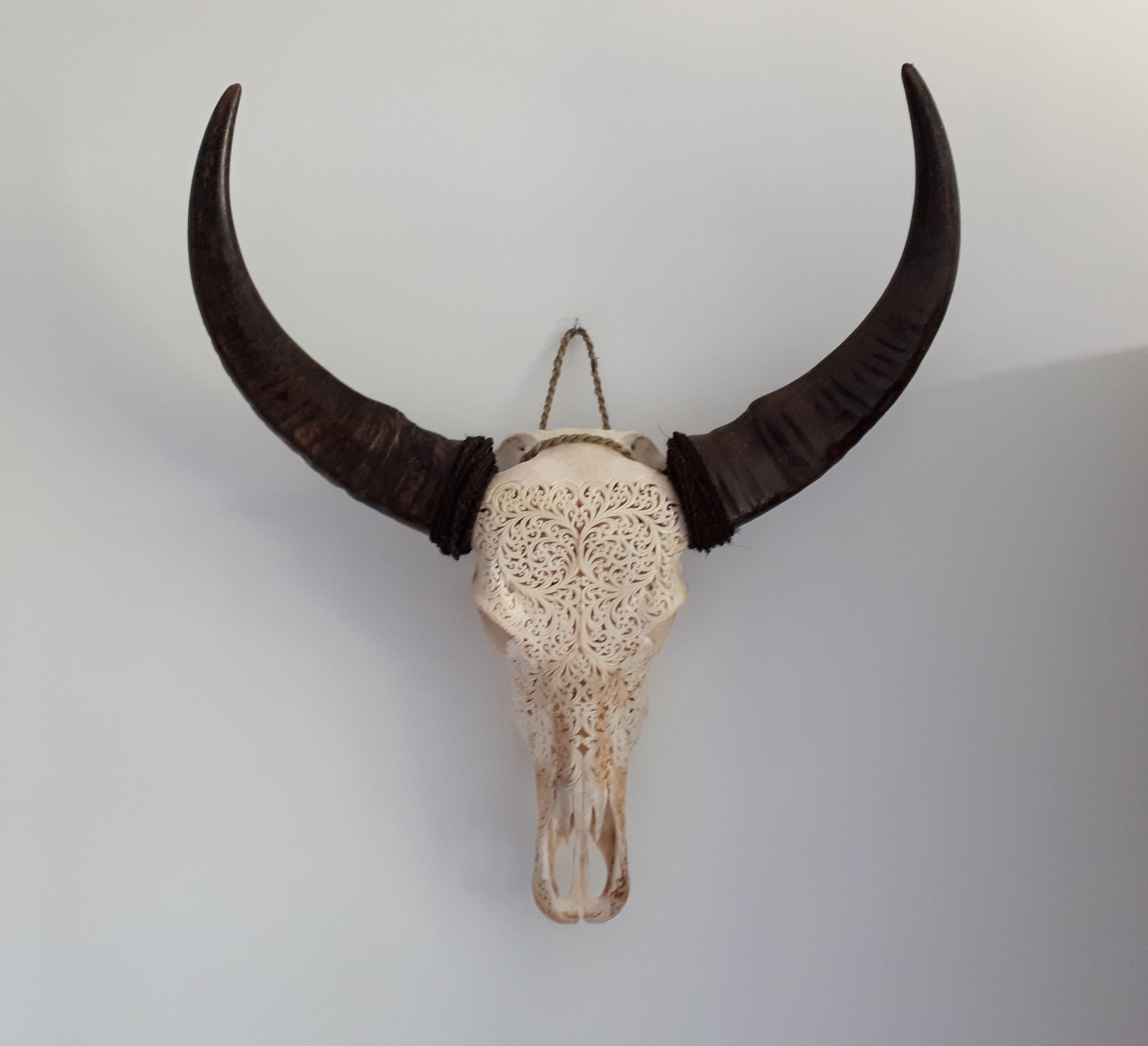 Pin Op Echte Skulls En Longhoorns