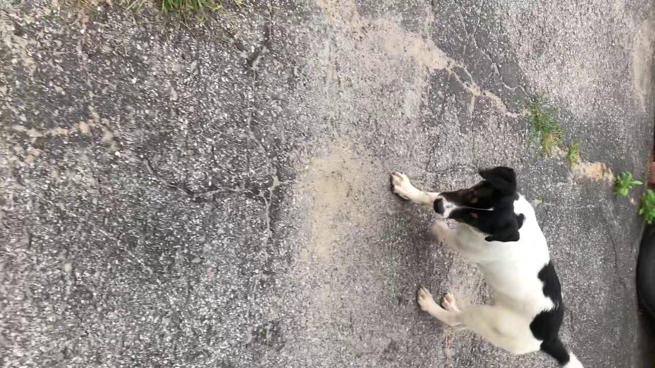 Palliative of Freedom Dog Rescue Ottawa Storm Storm update