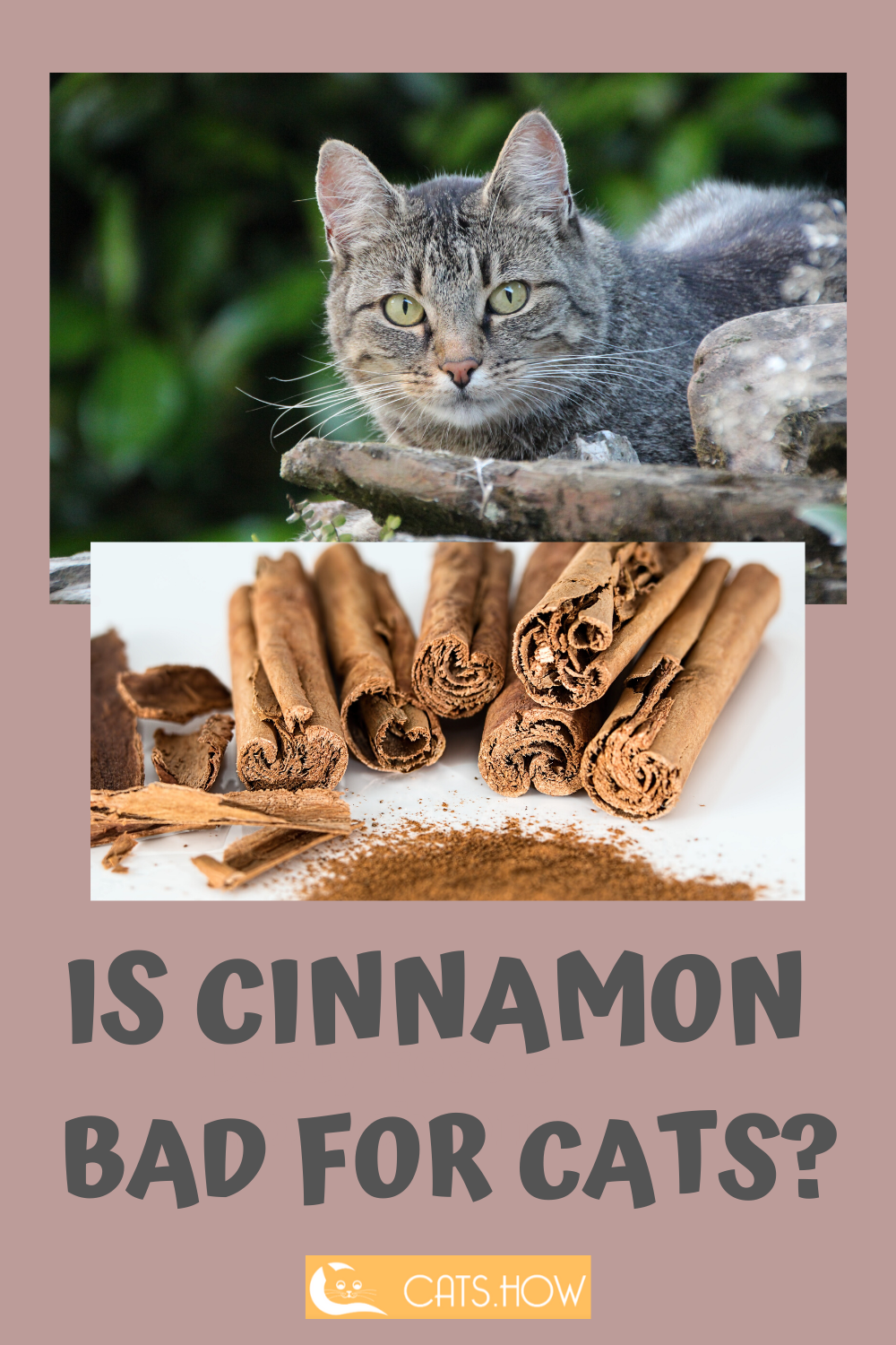 ᐉ Can Cats Eat Cinnamon Cats How Cats Are Awesome