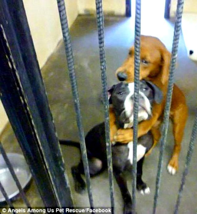 Hugging Dogs Saved From Kill Shelter Still Need Furever Home Shelter Dogs Shelter Puppies Dogs