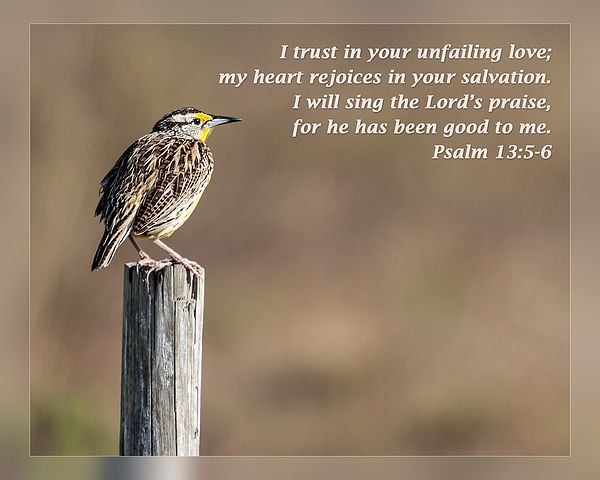 From Daily Scripture Project by artist Dawn Currie -   I trust in your unfailing love; my heart rejoices in your salvation. I will sing the Lord's praise, for he has been good to me. Psalm 13:5-6   Photograph of an Eastern Meadowlark taken in the River Lakes Conservation Area near Rockledge Florida. #DailyScripture #birds #Psalms