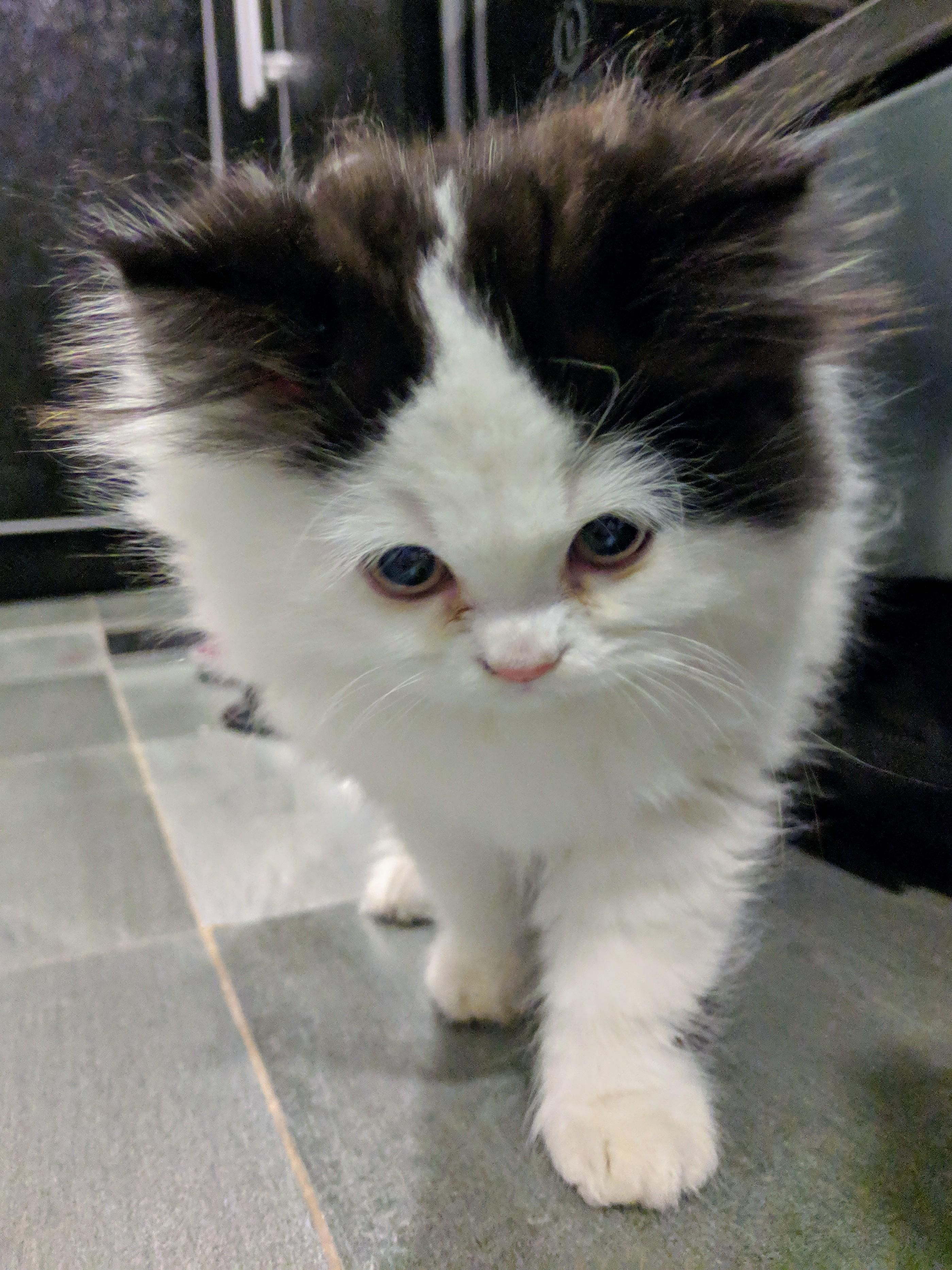 Reddit Say Hello To Chapo There Is New Floof In Town Cats Kittens Beautiful Kittens Kittens