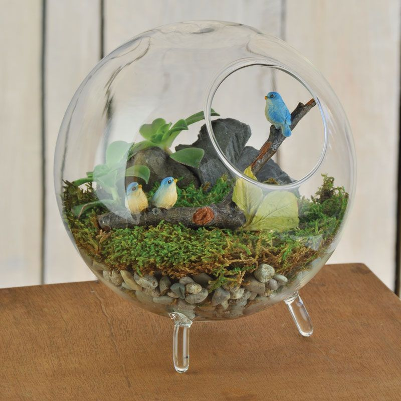 5 1 2 footed glass terrarium is a cute container that a for Indoor gardening glasses
