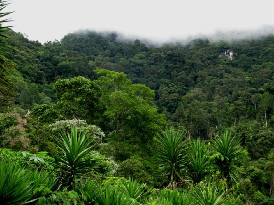 Pico Pijol Cloud Forest 940w National Parks Honduras Honduras Food