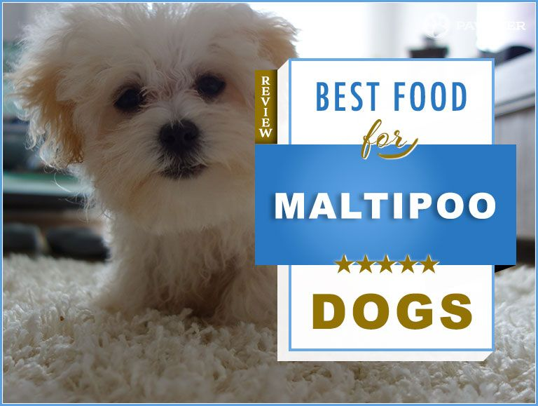 7 Best Foods to Feed an Adult and Puppy Maltipoo in 2019