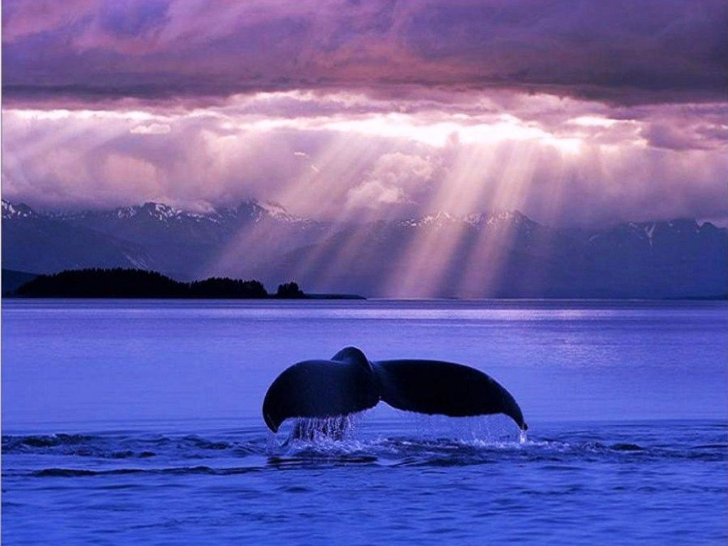Blue whales free whale in the evening blue wallpaper download blue whales free whale in the evening blue wallpaper download the free whale in voltagebd Gallery