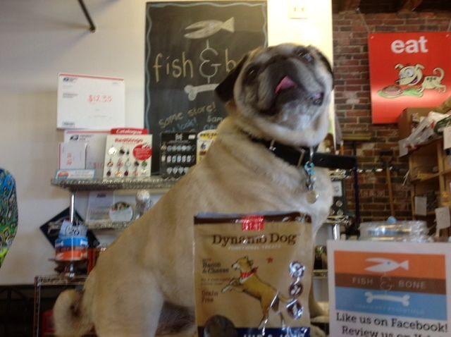 Fetch In Portland Me Natural Pet Natural Pet Food Food Animals