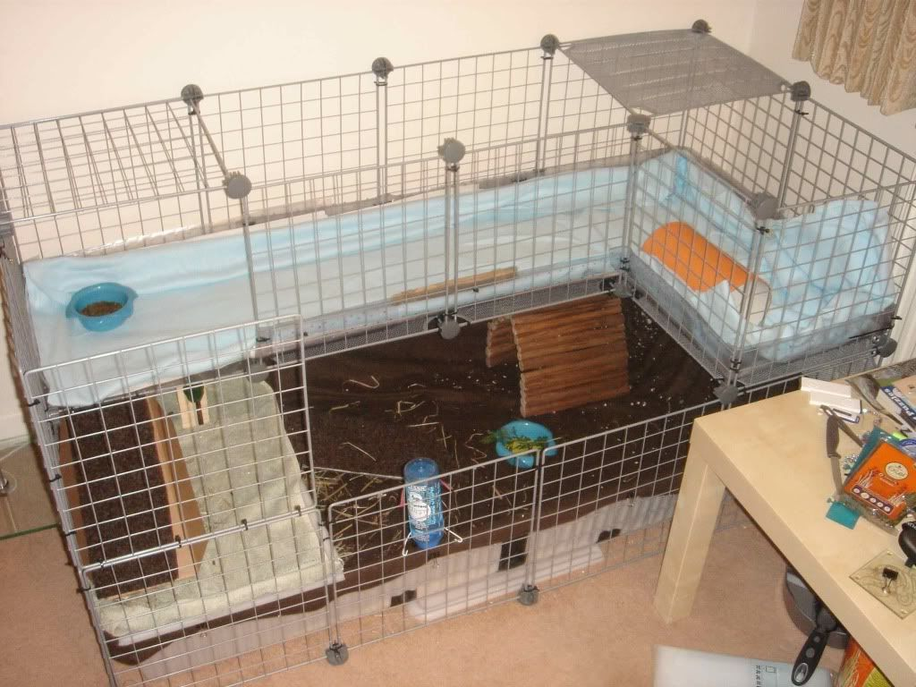 Guinea Pigs For Cc On Pinterest Guinea Pig Cages Guinea