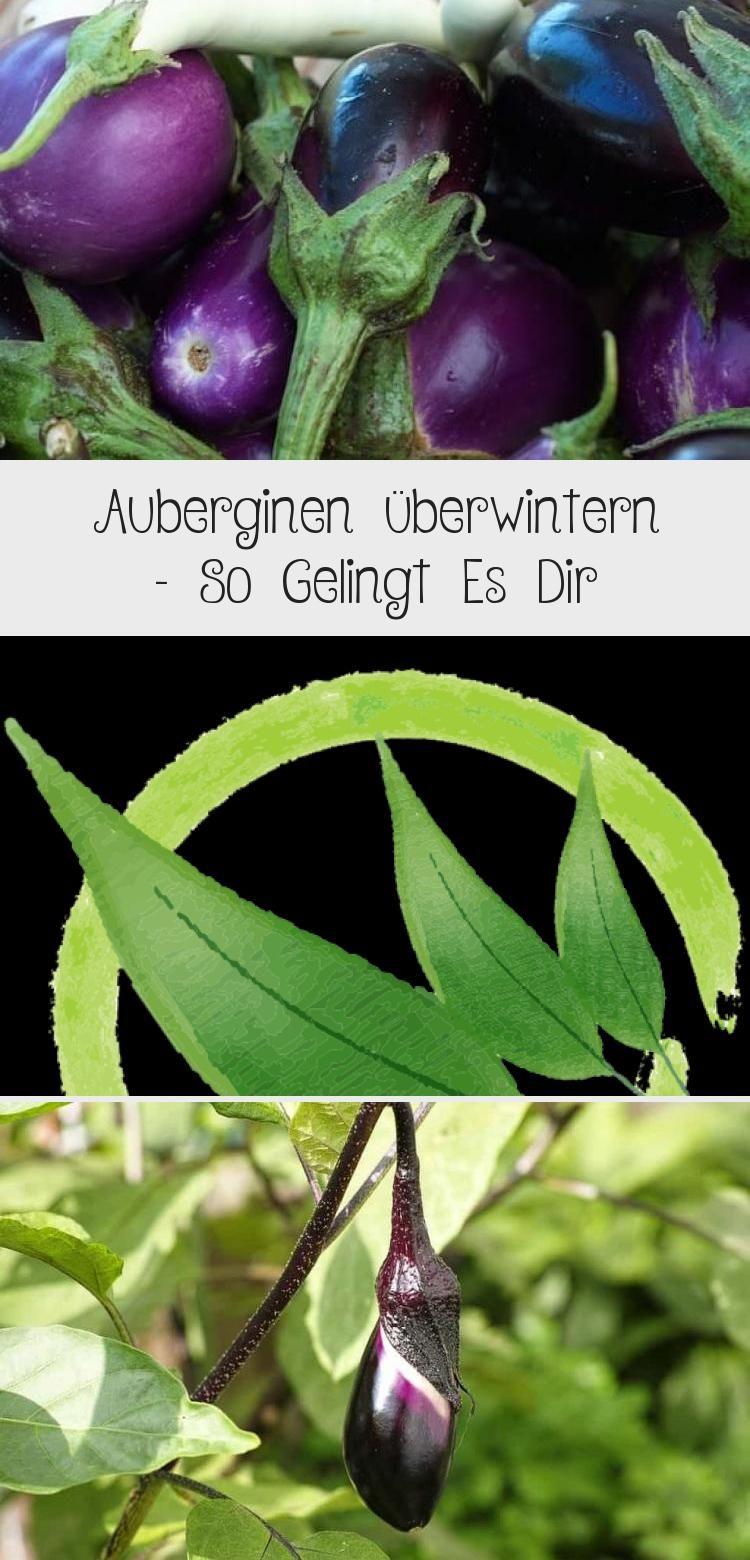 Auberginen Uberwintern Aubergine Gemuse Garten Gemusegarten Pflanzentanzen Gemusegarten In 2020 Eggplant Vegetables
