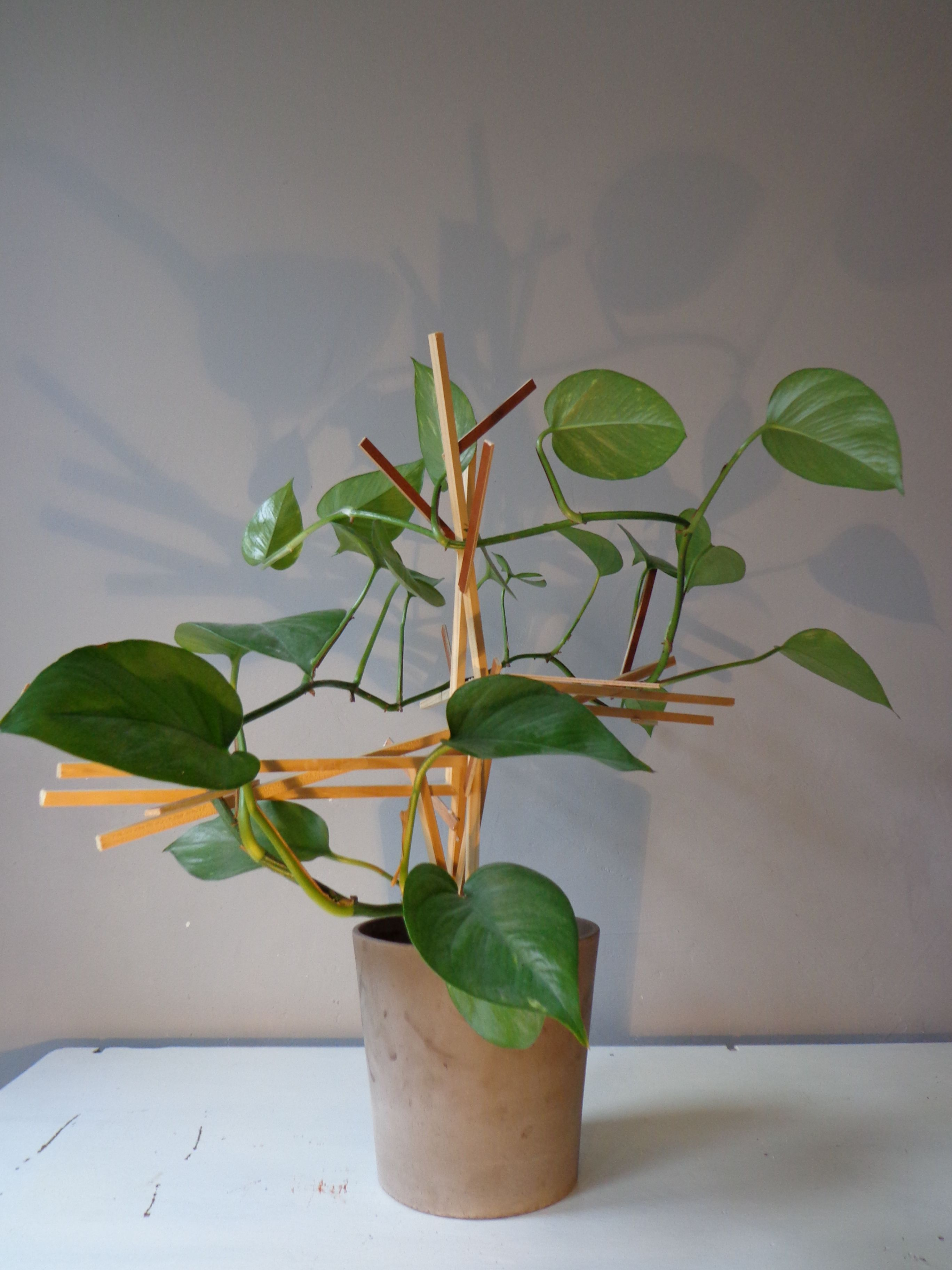 Powerplant, climbing structure creating a natural treelike plant indoors