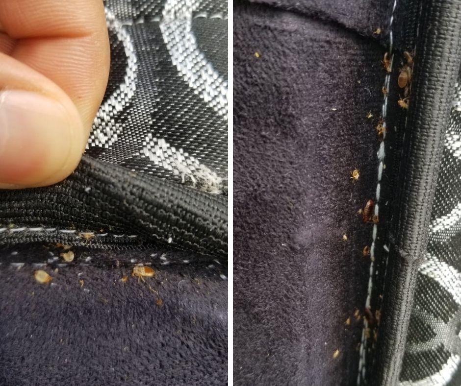 100 Guaranteed Bed Bug Extermination in Toronto & GTA. If