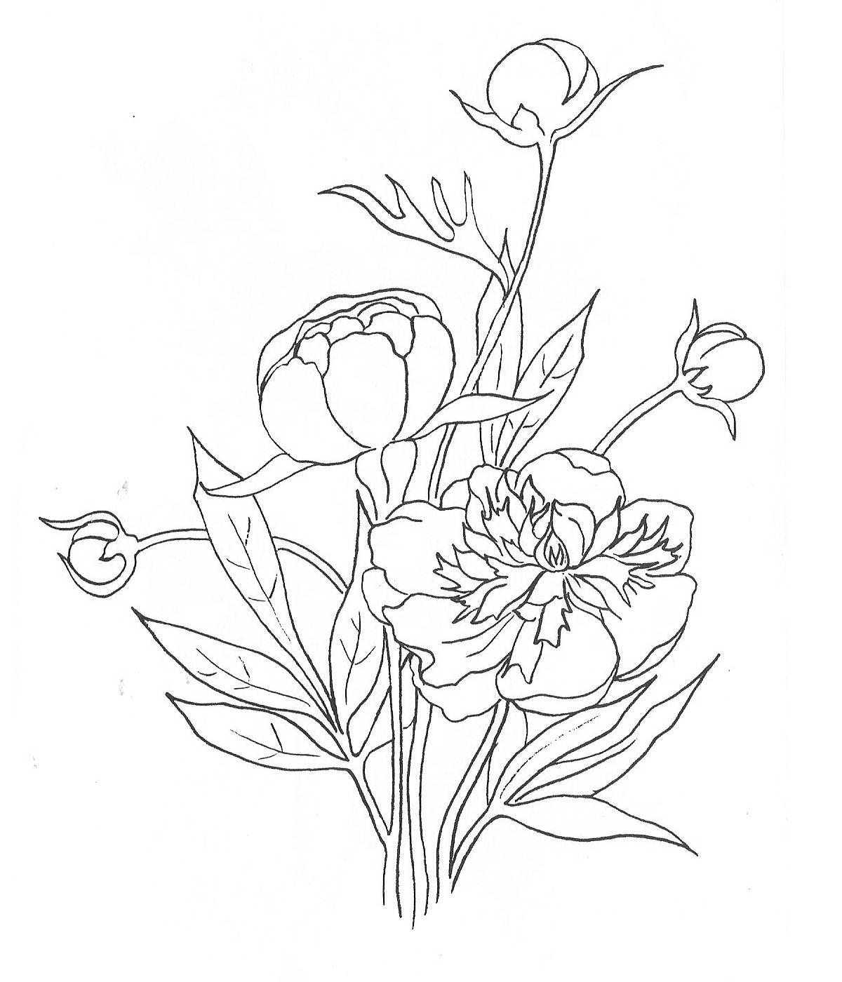 Раскраски садовый цветочек пион | Рисунки для ...