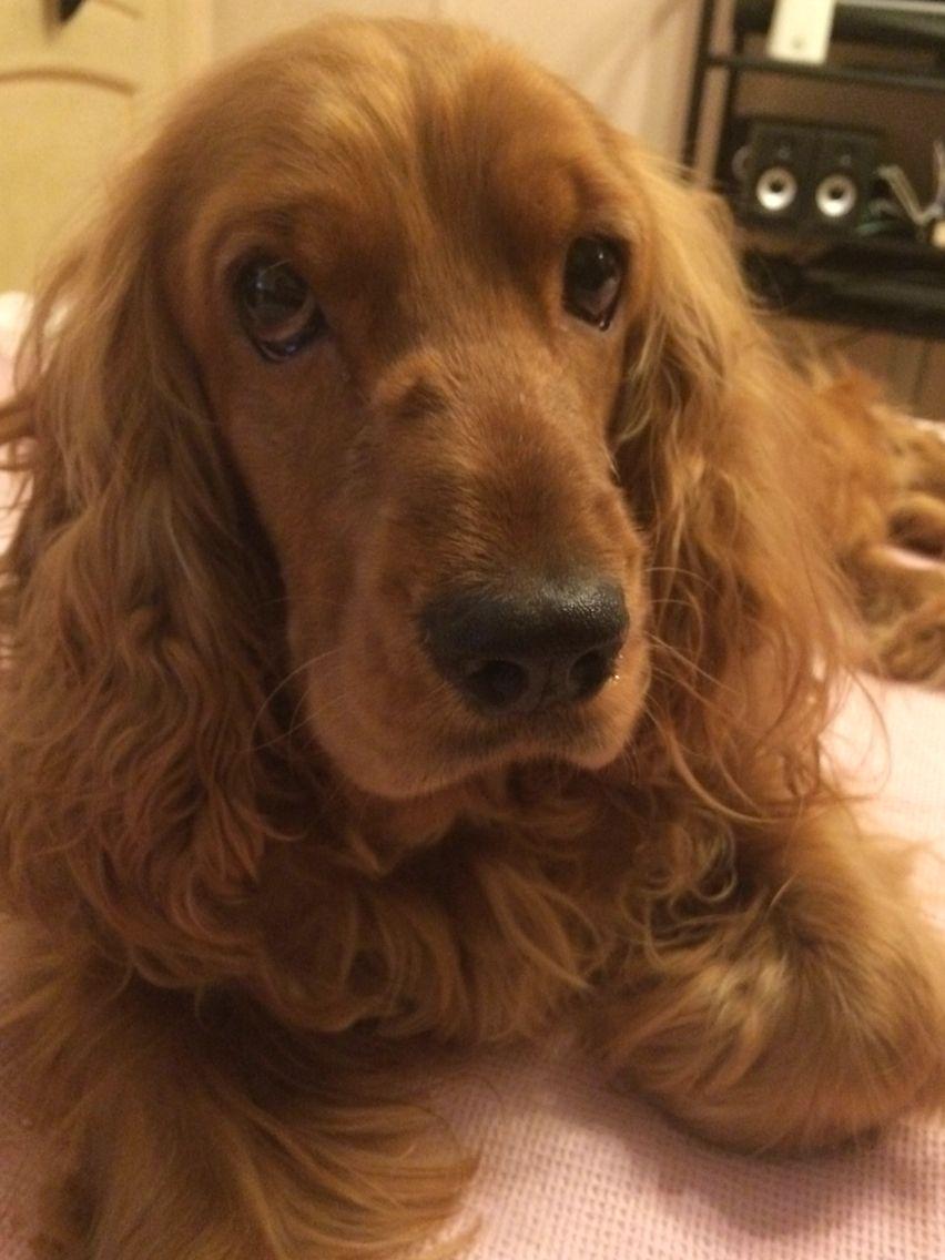 Good Puppy Brown Adorable Dog - fe7a661763abcdf99a9882a326b08f9c  Photograph_314290  .jpg