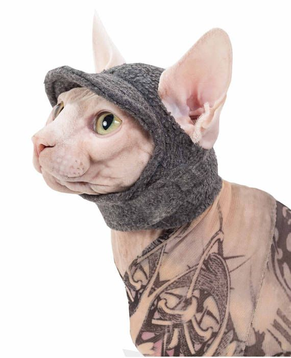 Sphynx Cat Kitten Hat For A Cat The Kitty Cap Cat Hat In Fleece With Gentle Velcro A Hat Cats Like Wearing Sphynx Cat Clothes Cats And Kittens Cat Clothes