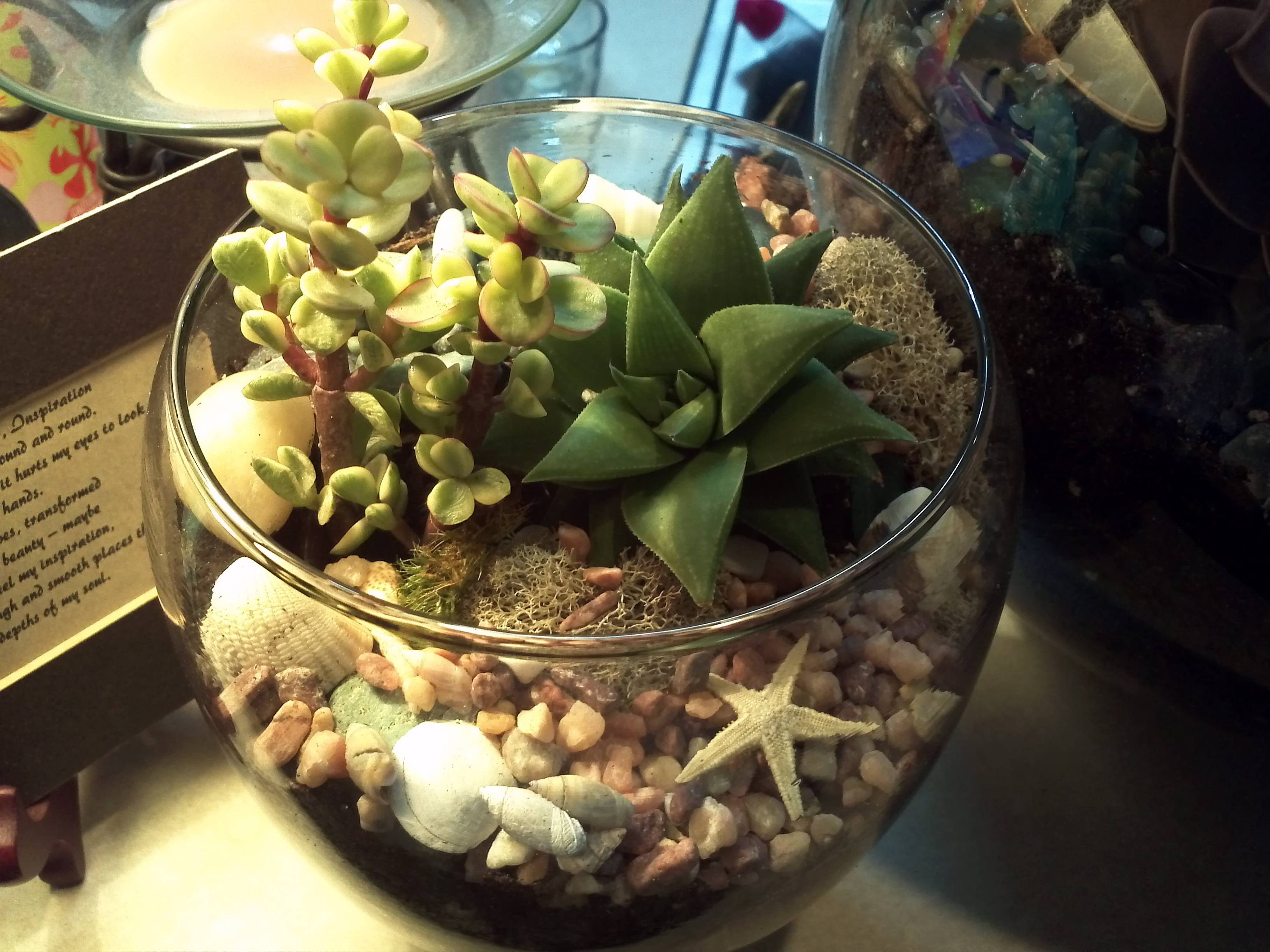 Small fishbowl my terrariums pinterest fishbowl and terraria