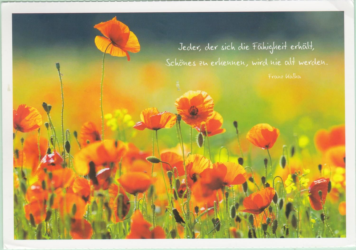 Postcard received from Germany >>
