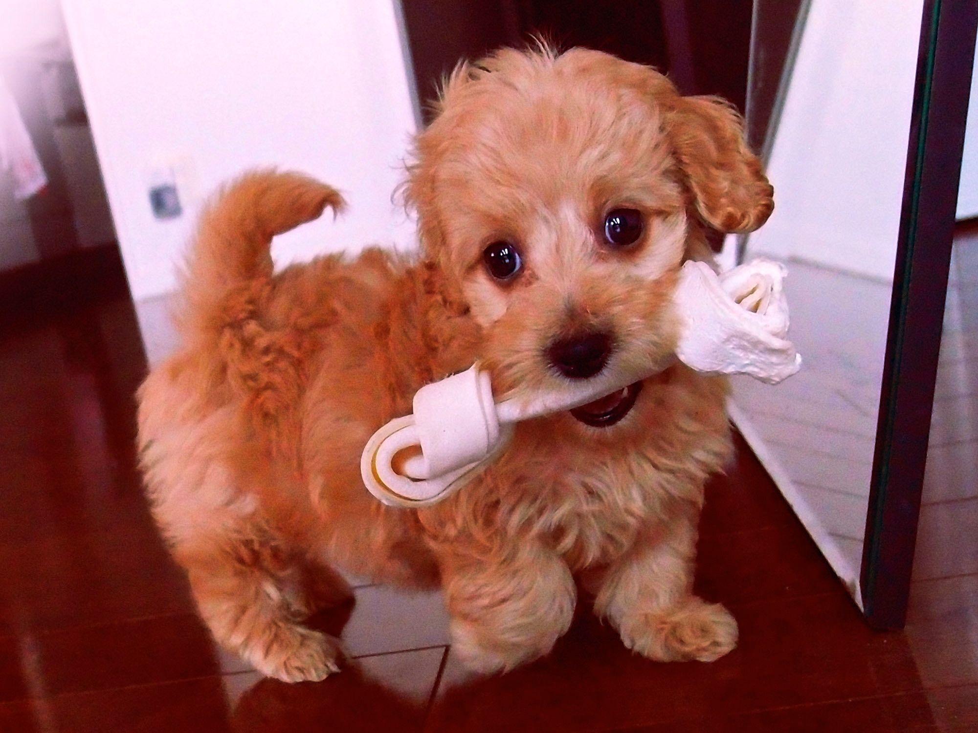 Pin By Cheyenne Bufford On Cuteness Dachshund Mix Dachshund Cross Dauchshund Puppy