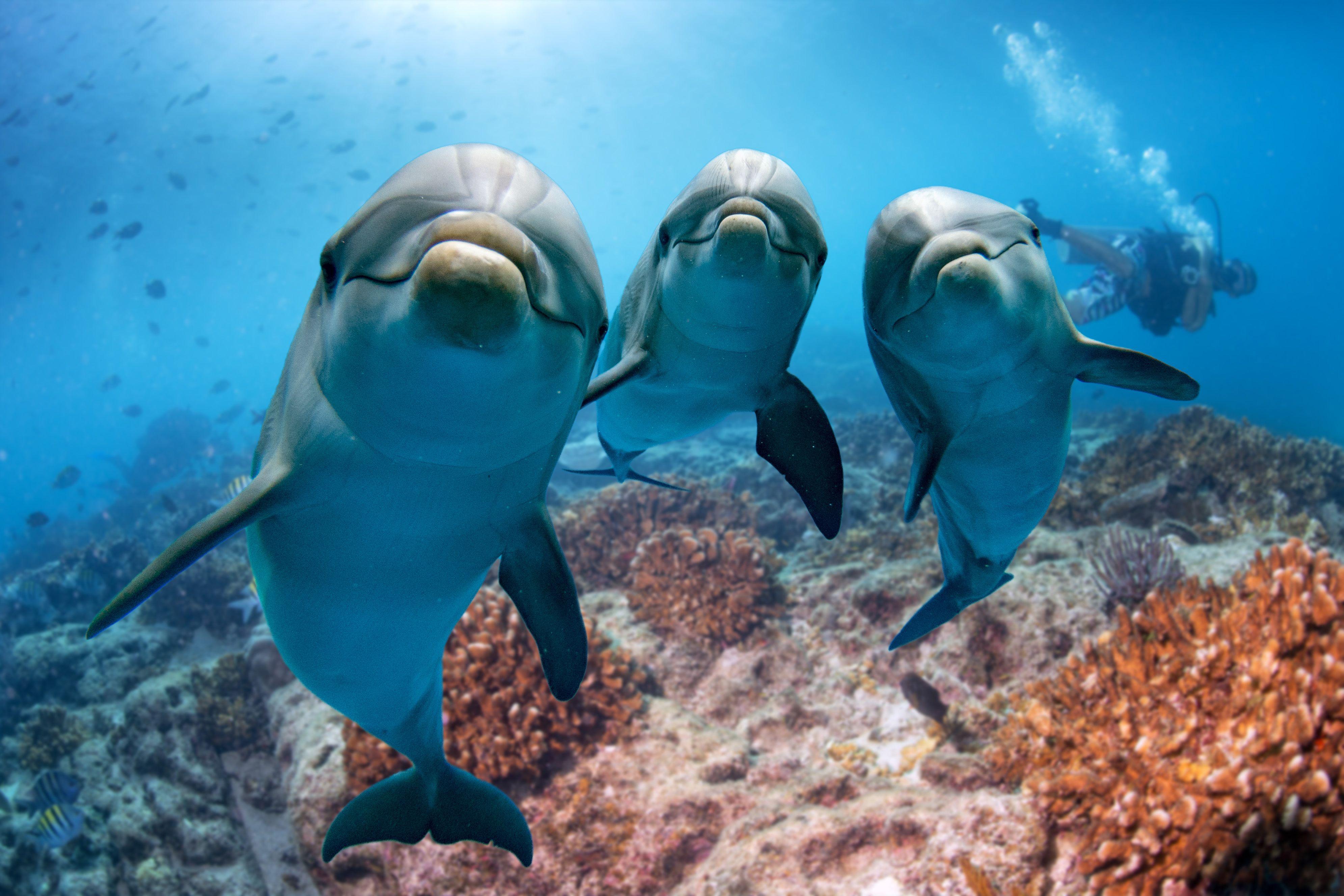 Dolphin Crafts I