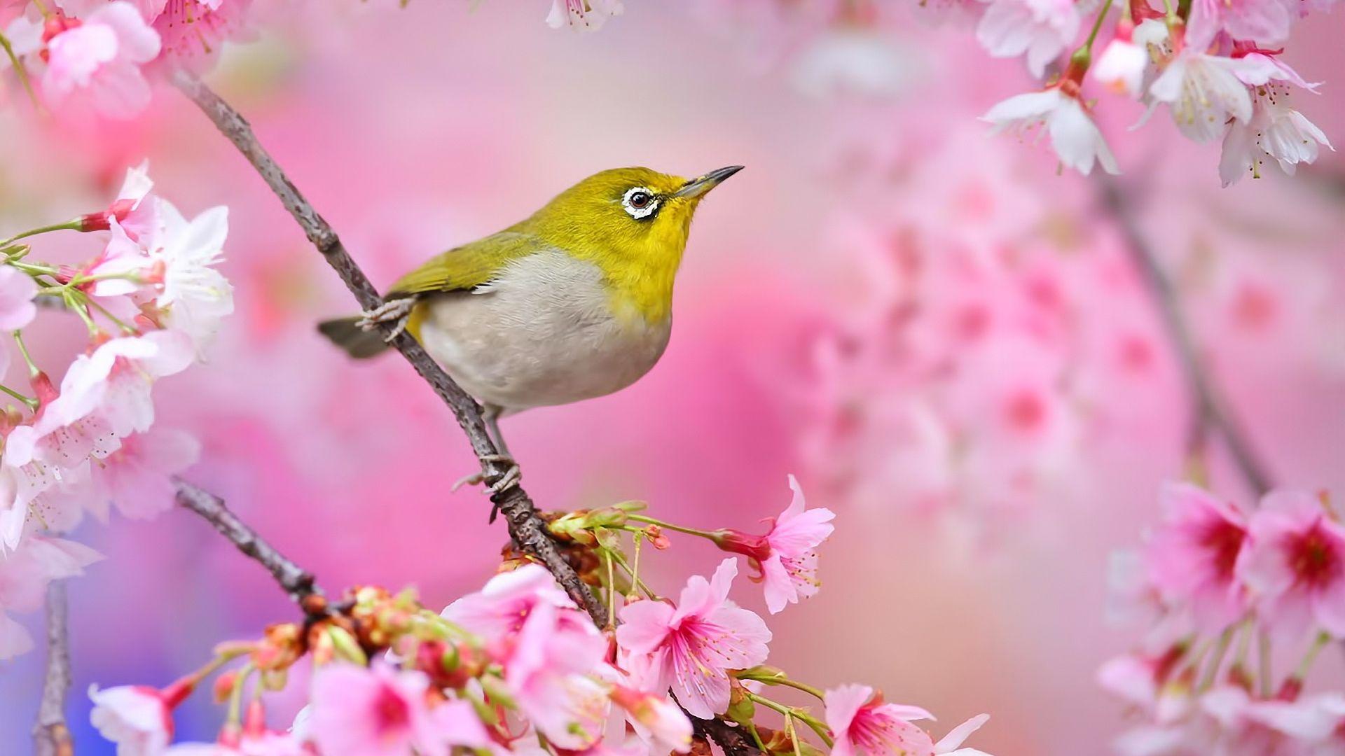 Обои цветы, птицы мира, красиво. Животные foto 10