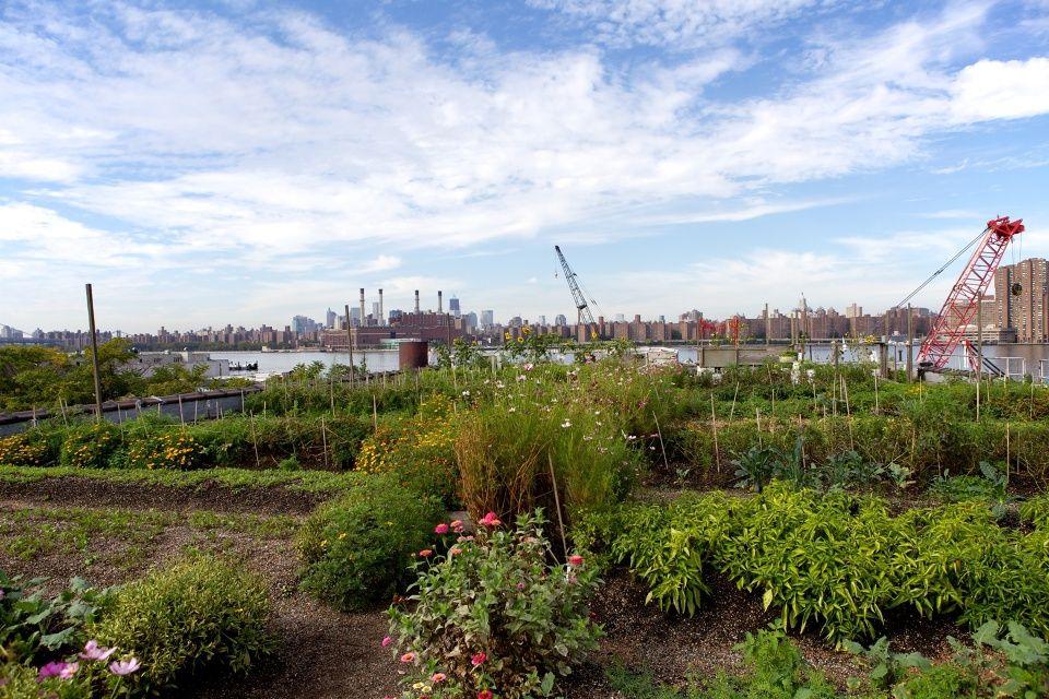 Eagle Street Rooftop Farm - Greenpoint Brooklyn
