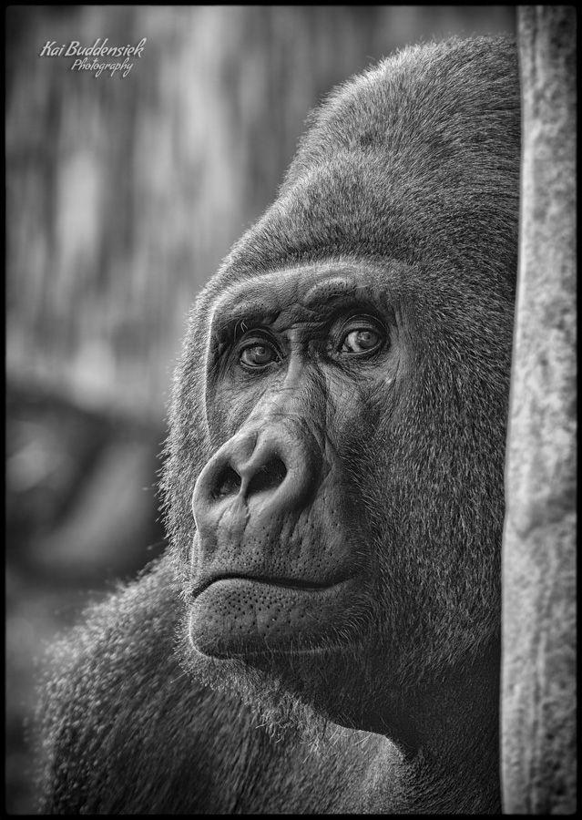 Look into my eyes by Kai Buddensiek, via 500px
