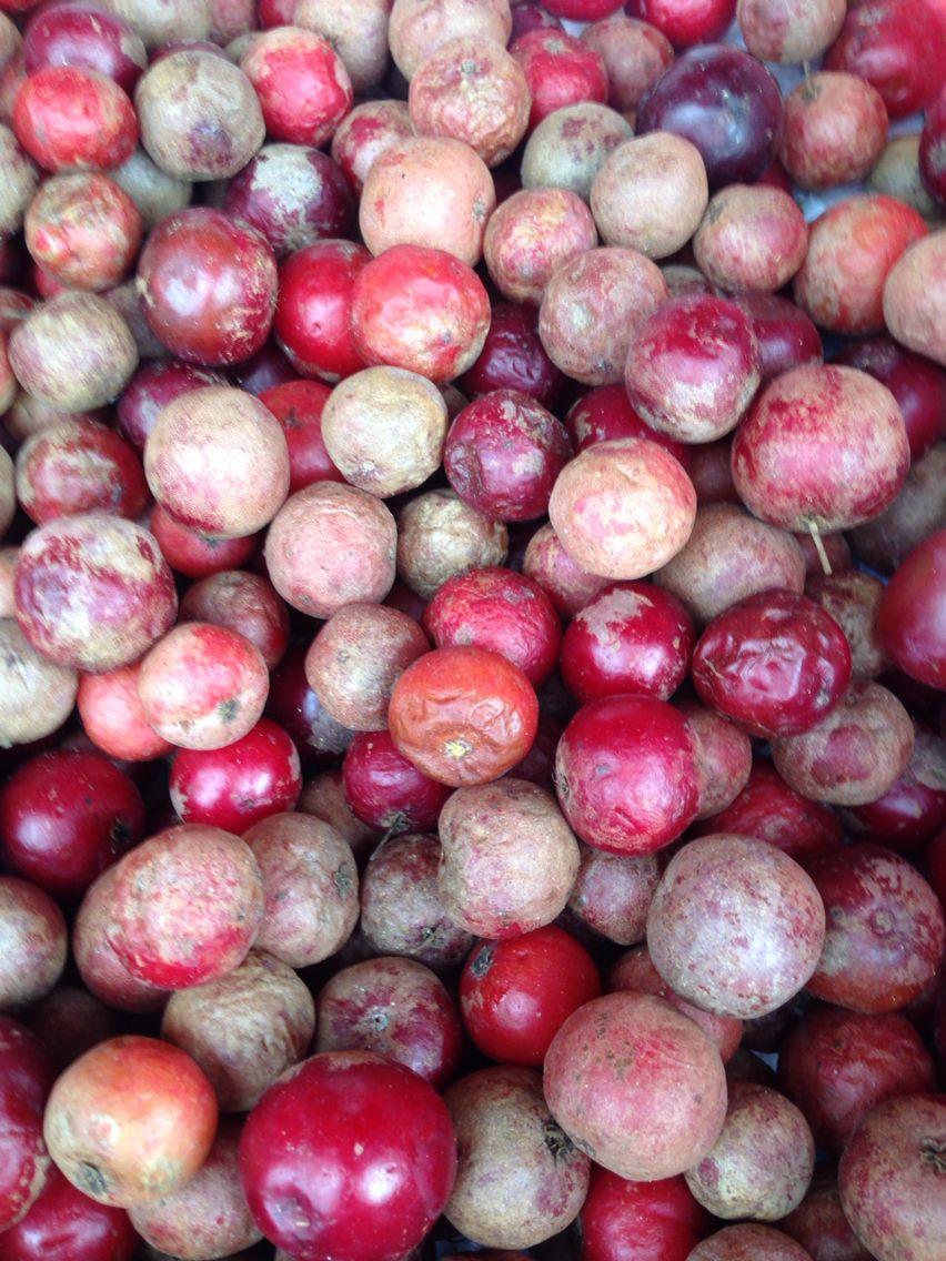 Fruit du Sri Lanka