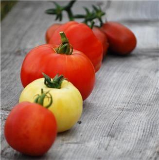 r ussir la culture des tomates jardin pinterest jardins potager et jardinage. Black Bedroom Furniture Sets. Home Design Ideas