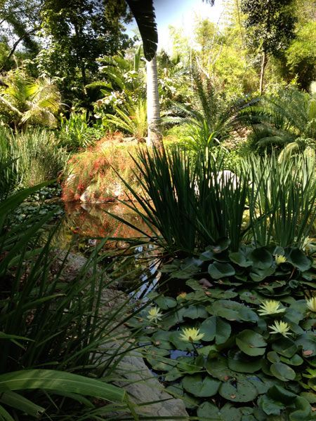 Los Angeles County Arboretum U0026 Botanic Garden, Arcadia, CA | The Master  Plan For