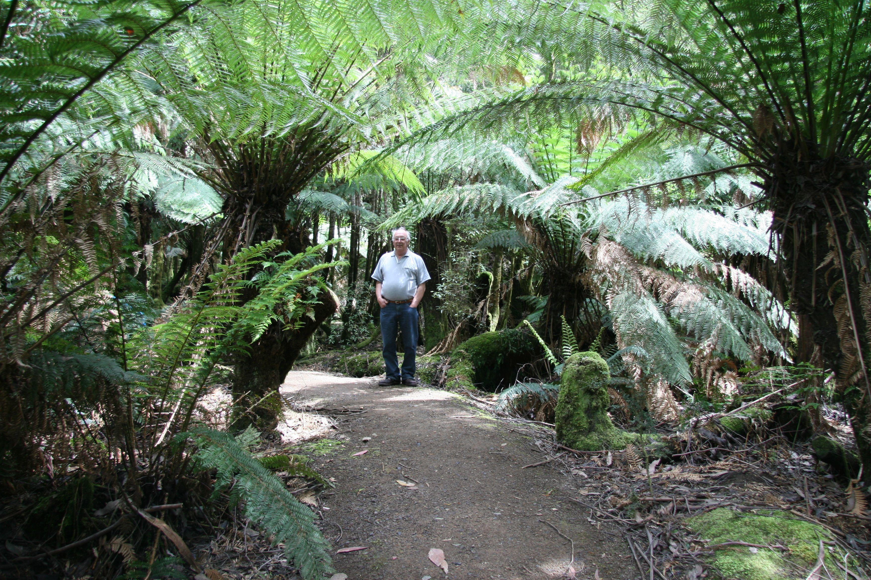 Tahune airwalk, Tasmania, Australia