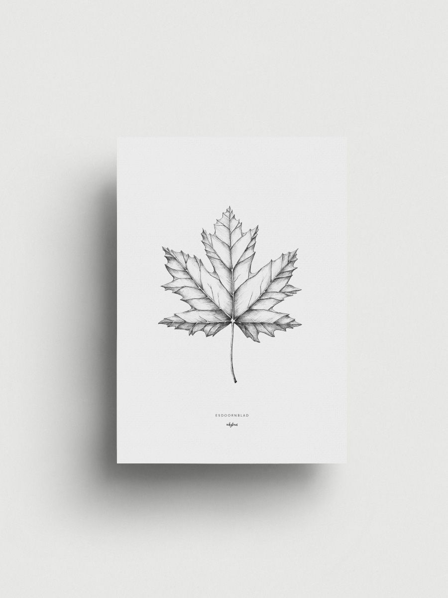 Maple Leaf Ink Pinterest Tattoos Drawings And Tattoo Designs