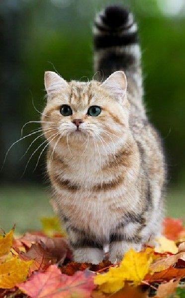Pin Von Christiane Grabowski Auf Cat S My Best Friends Mit