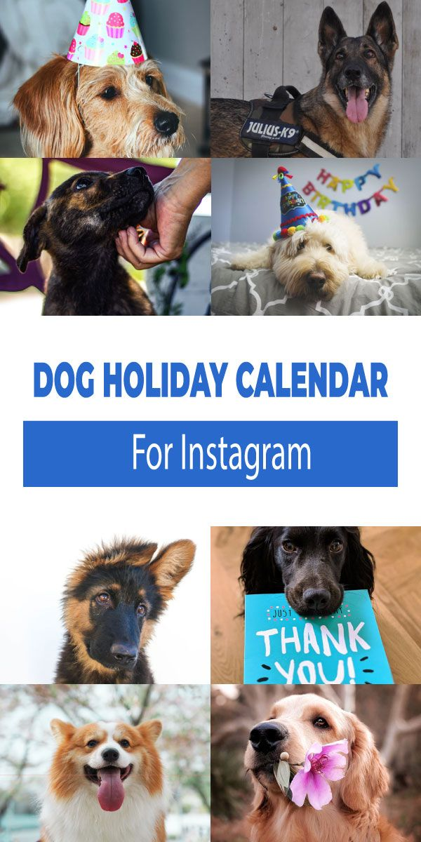 Dog Holiday Calendar For Instagram Cherbear Creative in